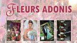 Fleurs Adonis